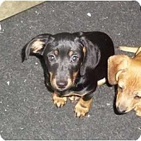 Adopt A Pet :: Taylor - Adamsville, TN