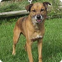 Adopt A Pet :: Khongi - Medora, IN
