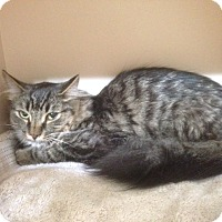 Adopt A Pet :: Trouble - london, ON