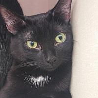 Adopt A Pet :: Poppy - Walnut Creek, CA