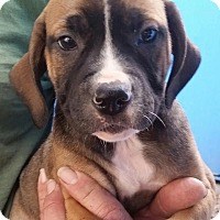 Adopt A Pet :: Ella Anne - Gainesville, FL