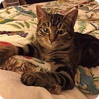 Adopt A Pet :: Paisley - Yardley, PA