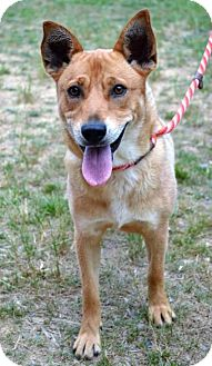 Australian Cattle Dog Mix Dog for adoption in Shakopee, Minnesota - Leliani D3178