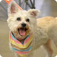 Adopt A Pet :: Star - Florence, KY