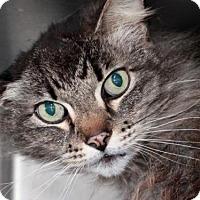 Adopt A Pet :: *EARL - Camarillo, CA