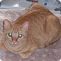 Adopt A Pet :: Tango - College Station, TX