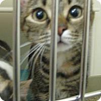Adopt A Pet :: Sophie - Ludington, MI