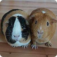 Adopt A Pet :: Pumpkin & Buttercup - Brooklyn Park, MN