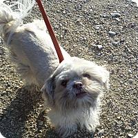Adopt A Pet :: TAZ/EWOK - Chewelah, WA