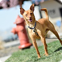 Adopt A Pet :: Joey - Meridian, ID