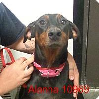 Adopt A Pet :: Alanna - baltimore, MD