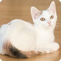 Adopt A Pet :: Dottie - Chicago, IL