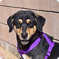 Adopt A Pet :: Bonkerz - Sierra Vista, AZ