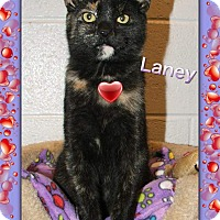 Adopt A Pet :: Laney - Atco, NJ