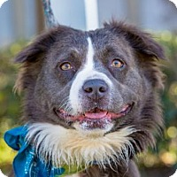 Adopt A Pet :: Harriet - San Diego, CA