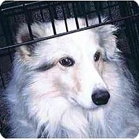 Adopt A Pet :: Finnegan - Indiana, IN