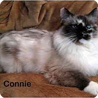 Adopt A Pet :: Connie - Portland, OR