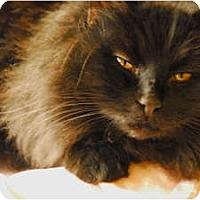 Adopt A Pet :: Noel - Lunenburg, MA