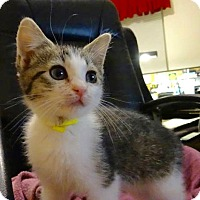 Adopt A Pet :: Susie -Adoption Pending! - Colmar, PA