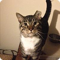 Adopt A Pet :: Sigmund - Roswell, GA