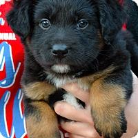 Adopt A Pet :: Luna - Simi Valley, CA