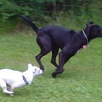 Labrador Retriever/Terrier (Unknown Type, Medium) Mix Dog for adoption in Marion, Alabama - Jace