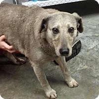 Adopt A Pet :: Lexy - Paducah, KY