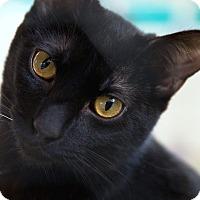 Adopt A Pet :: Murdock - St Louis, MO