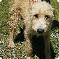 Adopt A Pet :: Glenda - Halifax, NC