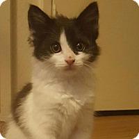 Adopt A Pet :: Moo - Parlier, CA