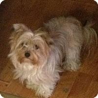 Adopt A Pet :: Miley - Hazard, KY