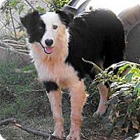 Adopt A Pet :: Bandit - Abilene, TX
