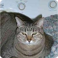 Adopt A Pet :: Sydney - Lombard, IL