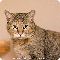 Adopt A Pet :: Shirley - Fountain Hills, AZ