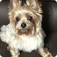Adopt A Pet :: Tobie - Hobart, WI