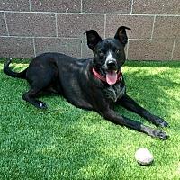 Adopt A Pet :: Chuck - Anaheim, CA
