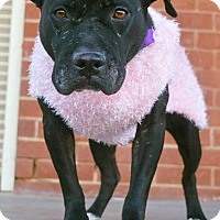 Adopt A Pet :: Tessa - Durham, NC