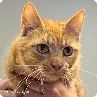 Adopt A Pet :: Breezee - Bedford, VA