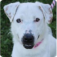 Adopt A Pet :: LEDONA: - Red Bluff, CA