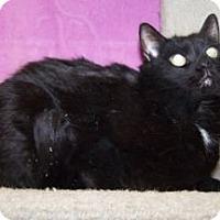 Adopt A Pet :: Ricky (aka Louie) - Colorado Springs, CO
