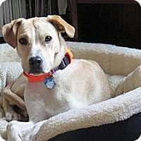 Adopt A Pet :: Patch - New Canaan, CT