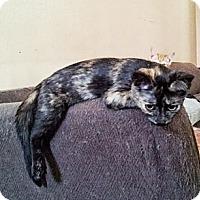 Adopt A Pet :: Carly - Dallas, TX