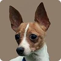 Adopt A Pet :: Rags - South Amboy, NJ