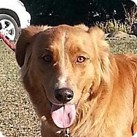 Adopt A Pet :: Wiley - Brattleboro, VT