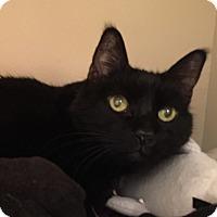 Adopt A Pet :: Spenser - Laguna Woods, CA