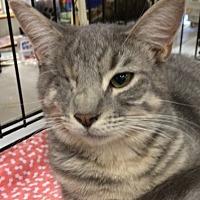 Adopt A Pet :: Sunshine - Cocoa, FL