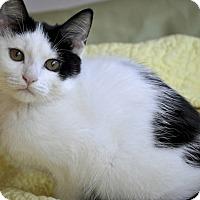 Adopt A Pet :: Tria (Super affectionate!) - New Smyrna Beach, FL