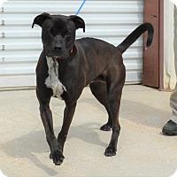 Adopt A Pet :: Salem - Jackson, GA