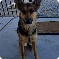 Adopt A Pet :: Natasha - Las Vegas, NV