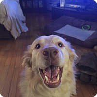 Adopt A Pet :: Kanye - Staten Island, NY